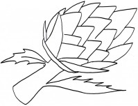 Related Wallpaper For Print Out Vegetable Happy Face Cauliflower Coloring Page Preschool