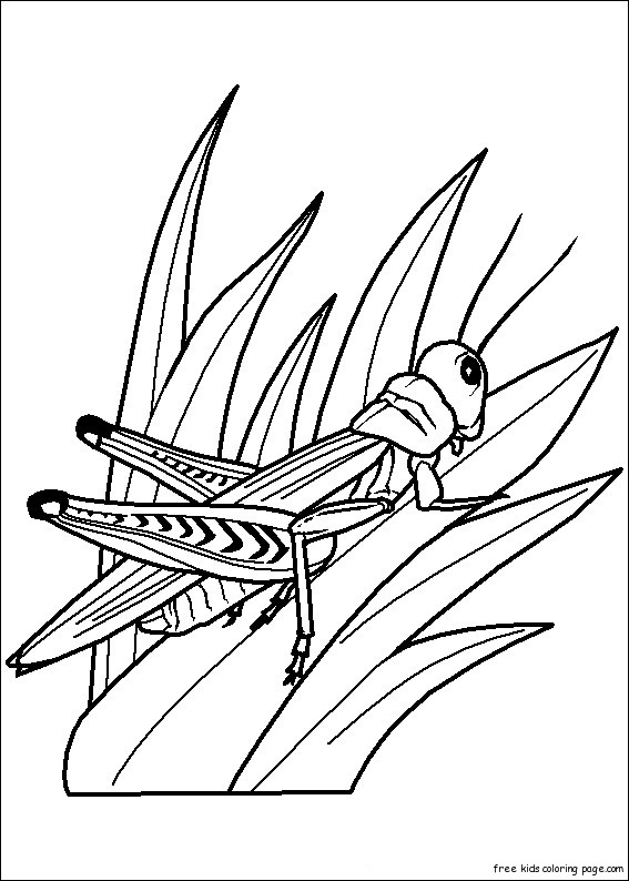 Printable Insects Grasshoppers Childrens Coloring