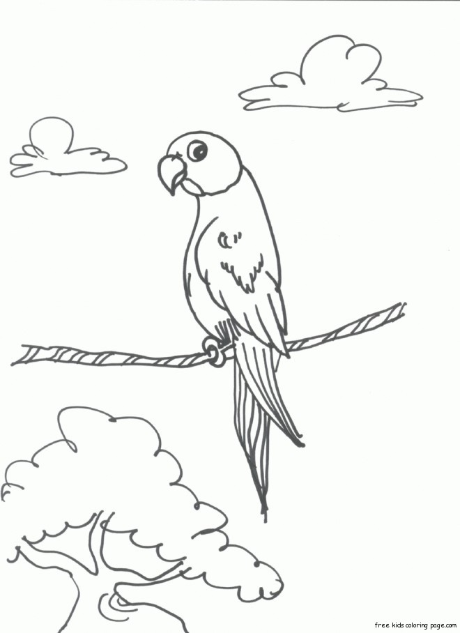 Print out bird Parrots coloring