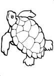 turtle ocean coloring page