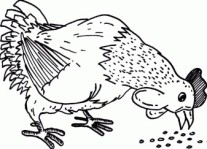 Farm chickens Eating dinner coloring page
