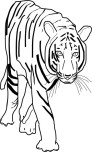 Printable coloring pages Bengal Tigers
