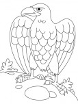 Printable animal eagle coloring book page