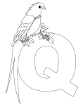 Printable Animal Alphabet Letter Q for Queen Whydah