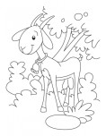Printable farm animal goat coloring pages
