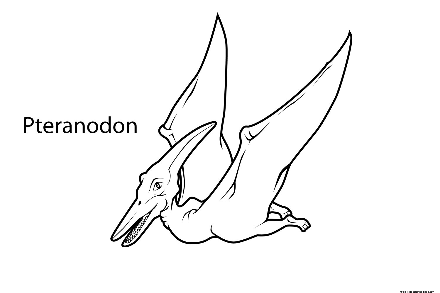 printable pteranodon dinosaur coloring pages for kidsfree