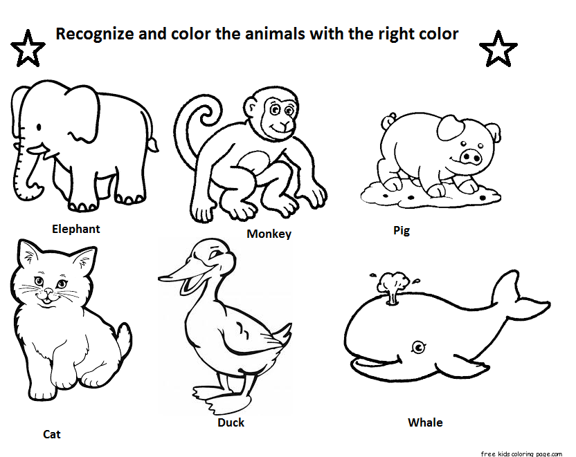 Identify animals coloring Free